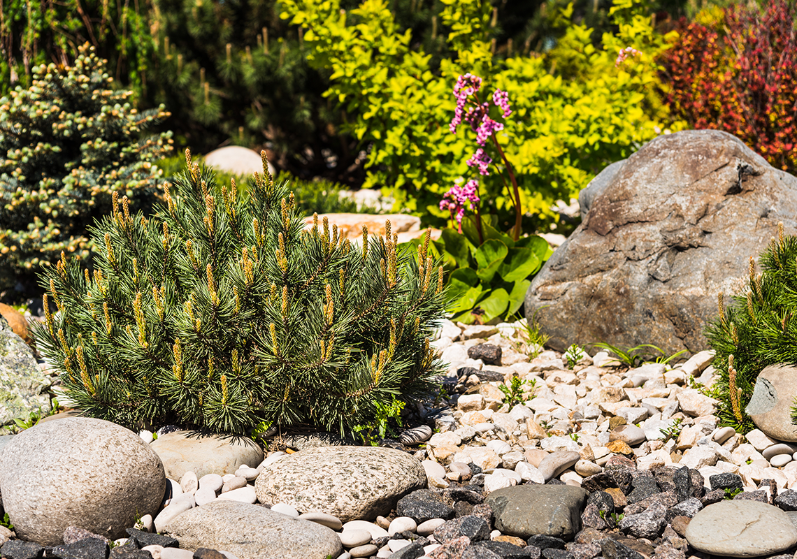 Flowerbed and rockery surrounded by gravel